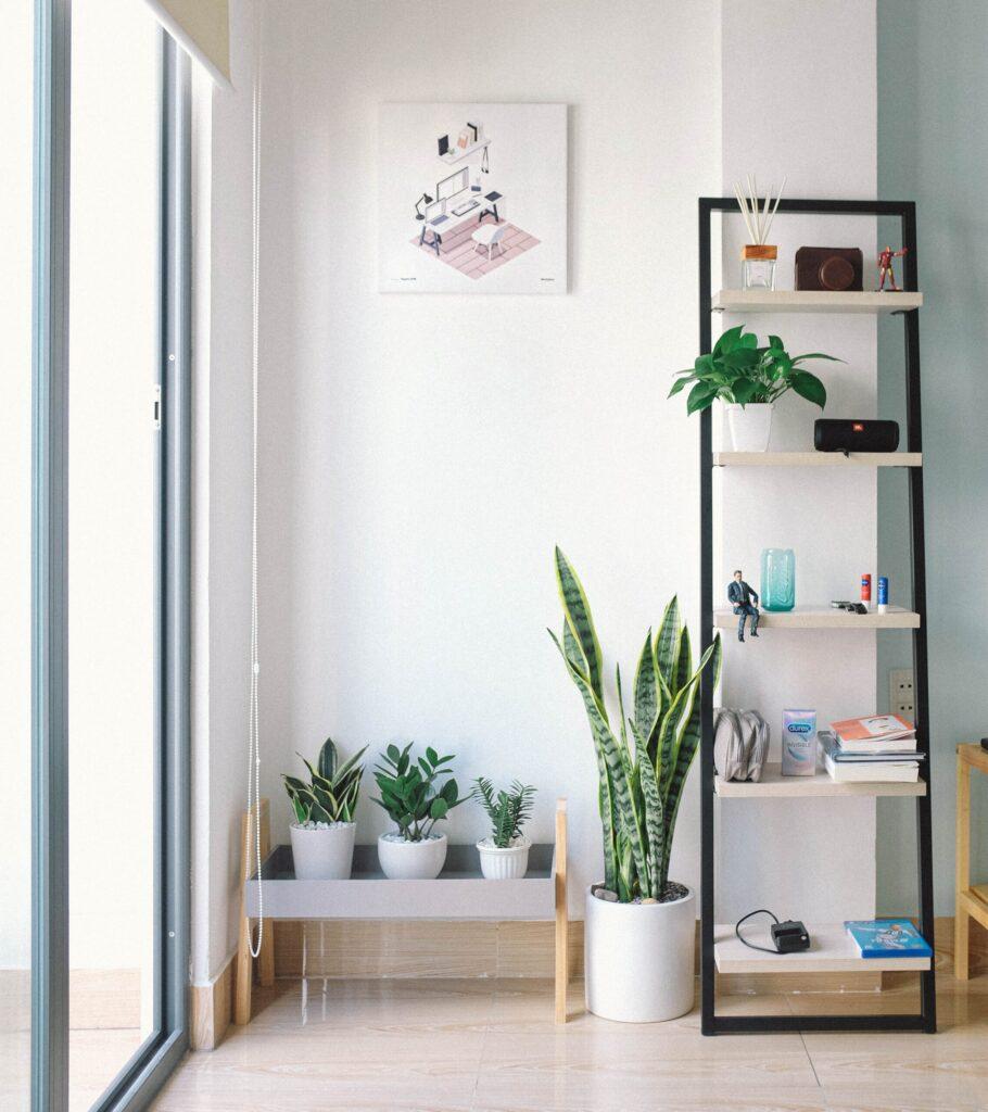 Rectangular white and black wooden display rack beside green snake plant