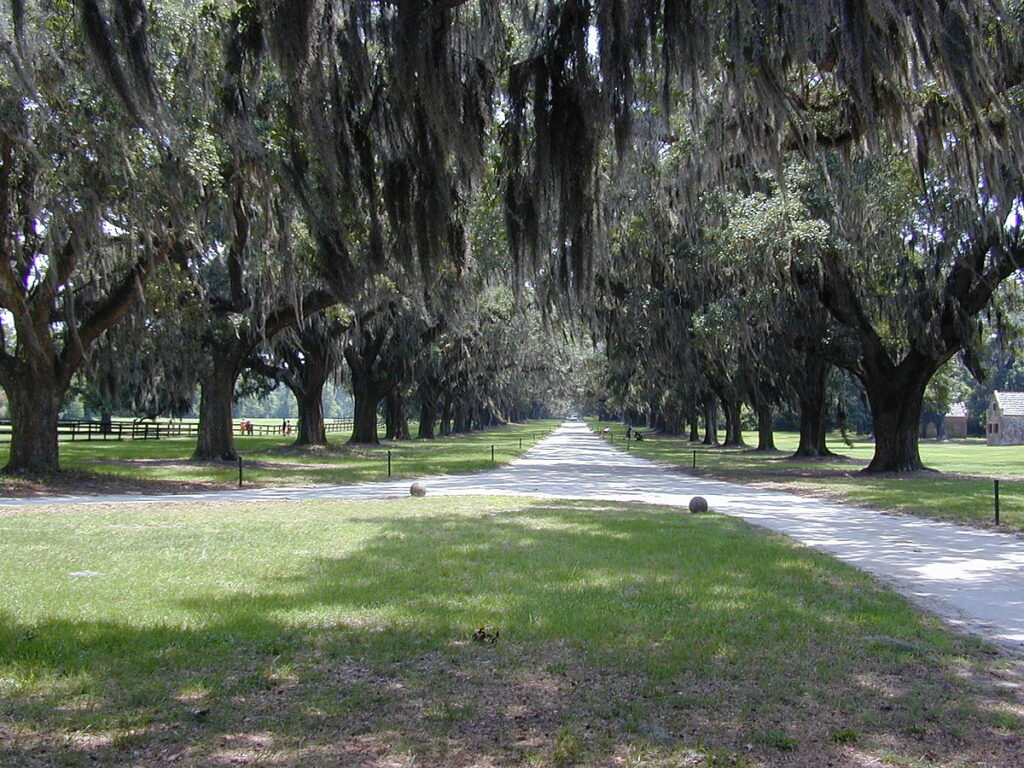 A Mount Pleasant park with signature live oaks and Spanish moss hanging from them.